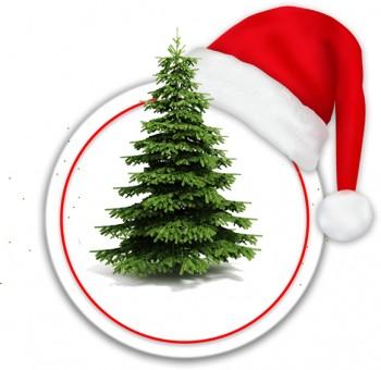 Christmas trees Abies Nordmanniana