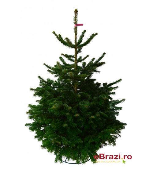 Brad natural de Craciun nordmann premium 100-125 cm