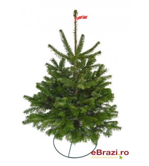 TOP QUALITY Nordmann Christmas tree 0,5-1m