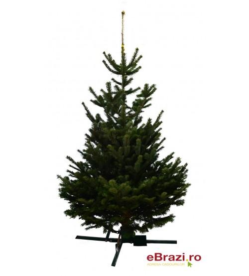 Brad natural de Craciun nordmann standard 150-175 cm
